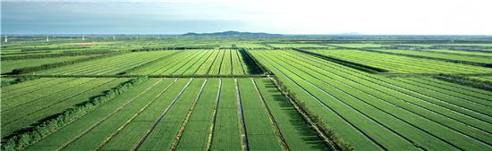 粮食规模化种植
